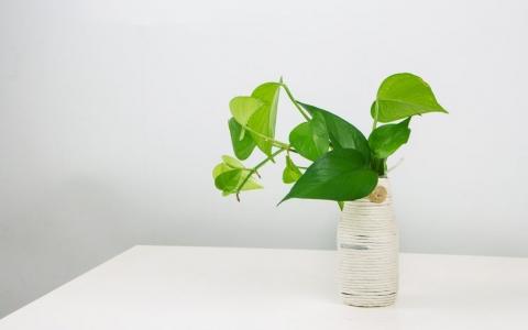 除甲醛的植物花有哪些