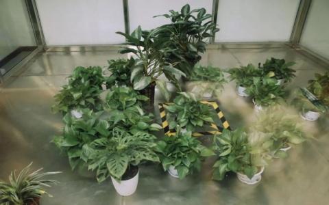 植物到底能不能除甲醛吗? 绿色植物有除甲醛的效果吗?