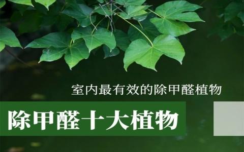 除甲醛植物排行榜,除甲醛最好的植物